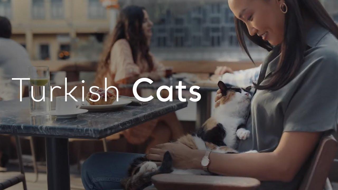 Go Turkey - Turkish Meows
