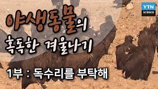 야생동물의 혹독한 겨울나기 1부 / YTN 사이언스