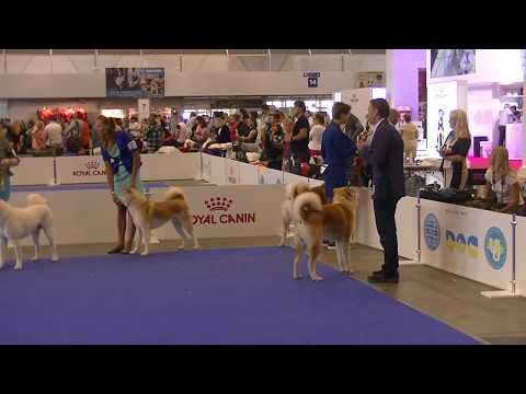 Japanese Akita Euro Dog Show 2017
