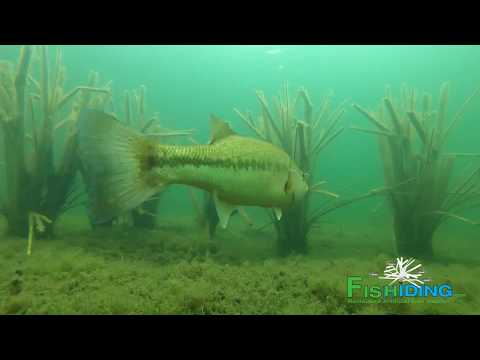 The Science Behind Fishiding Artificial Fish Habitat-Time Lapse Video (Part 2 Of 10)