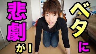 【悲報】ますおのベタが・・・&お引っ越し! thumbnail