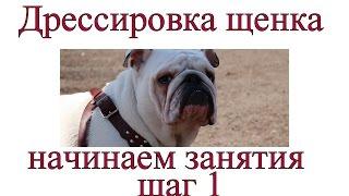 Дрессировка щенка - это видео основа в правильном  обучении щенка!
