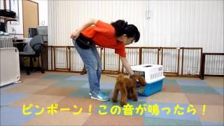 インターフォンで吠えてしまうワンコの飼い主さま必見! http://www.wan...