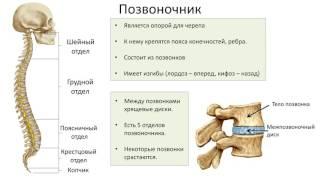 8. Опорно двигательная система скелет (8 класс) биология, подготовка к ЕГЭ и ОГЭ