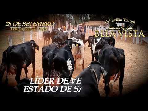 13° LEILÃO MATRIZES TOP LEITE BELA VISTA