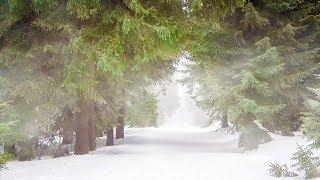 Fantasy Music - Elven Sanctuary (Asian Winter Remix)