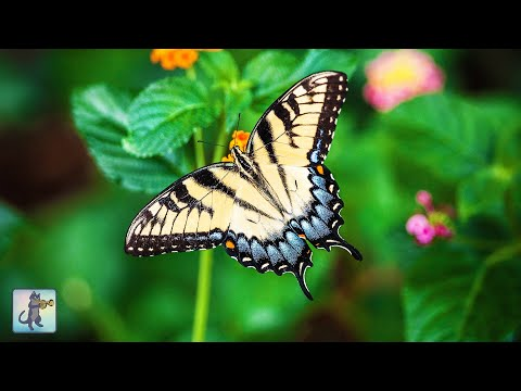 3 HOURS of Beautiful Butterflies & Flowers // Amazing Nature Scenery Butterfly (1080p HD)