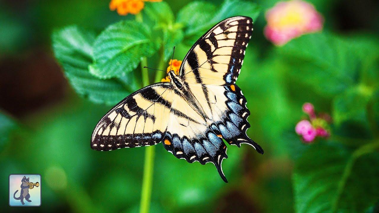 beautiful butterflies u0026 flowers planet earth amazing nature