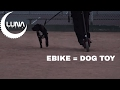 Ebike is world's greatest Dog Toy