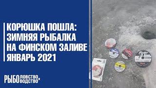 Корюшка пошла зимняя рыбалка на Финском заливе январь 2021