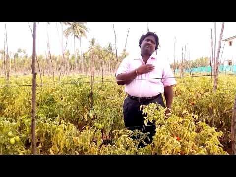 Muthukku Muthaga