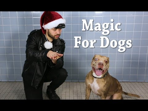 Christmas Magic For Shelter Dogs!