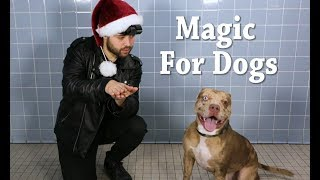 Everyone deserves a little holiday cheer this time of year, so we decided to bring the magic of the holidays to these animal shelter dogs. Please visit your local animal shelter to help bring the magic of adoption to all animals.   Credits:  John Stessel - Magician - https://www.johnstessel.com/ Directed and Produced by Rob Bliss Creative - http://robblisscreative.com  For media requests please contact: Courtney.Makin@turner.com  SUBSCRIBE: http://bit.ly/TBSSub  Download the TBS App: http://bit.ly/1qBbkMW  About TBS:   The home of Angie Tribeca, Full Frontal with Samantha Bee, Conan Wrecked, People of Earth, Search Party, The Detour, and American Dad.  Get more TBS:   Full Episodes: http://www.TBS.com/shows/   YouTube: http://www.YouTube.com/TBS   Twitter: https://Twitter.com/TBSNetwork Facebook: http://Facebook.com/TBSNetwork   Instagram: https://Instagram.com/TBSNetwork    Magic for Animal Shelter Dogs | TBS http://www.YouTube.com/user/TBS