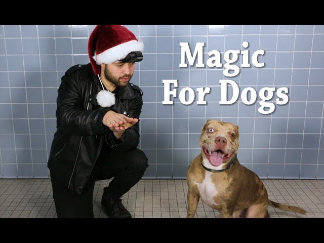 Magic for Animal Shelter Dogs | TBS
