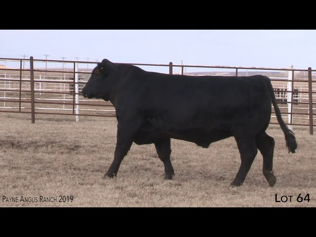 Payne Angus Ranch Lot 64