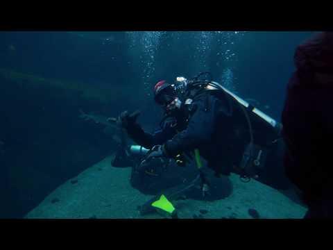 Plongée sous-marine au Biodome avec Total Diving Montréal