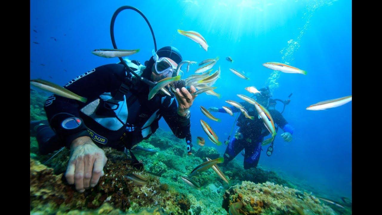 Lặn biển ngắm san hô khi đi du lịch Nha Trang