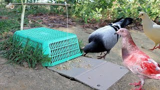 Building Fantastic Hole Bird Trap Make from Plastic Basket N Cardboard