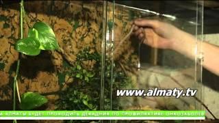 Бизнес на экзотических животных процветает в Алматы