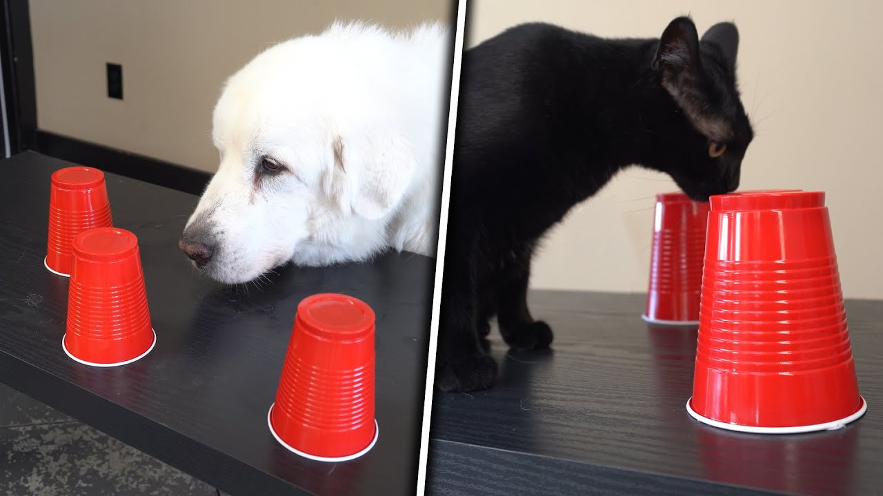 DOGS vs CATS: The Cup Game Challenge - download from YouTube for free