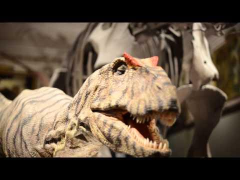 Dinosaur at Naturhistorisches Museum Wien