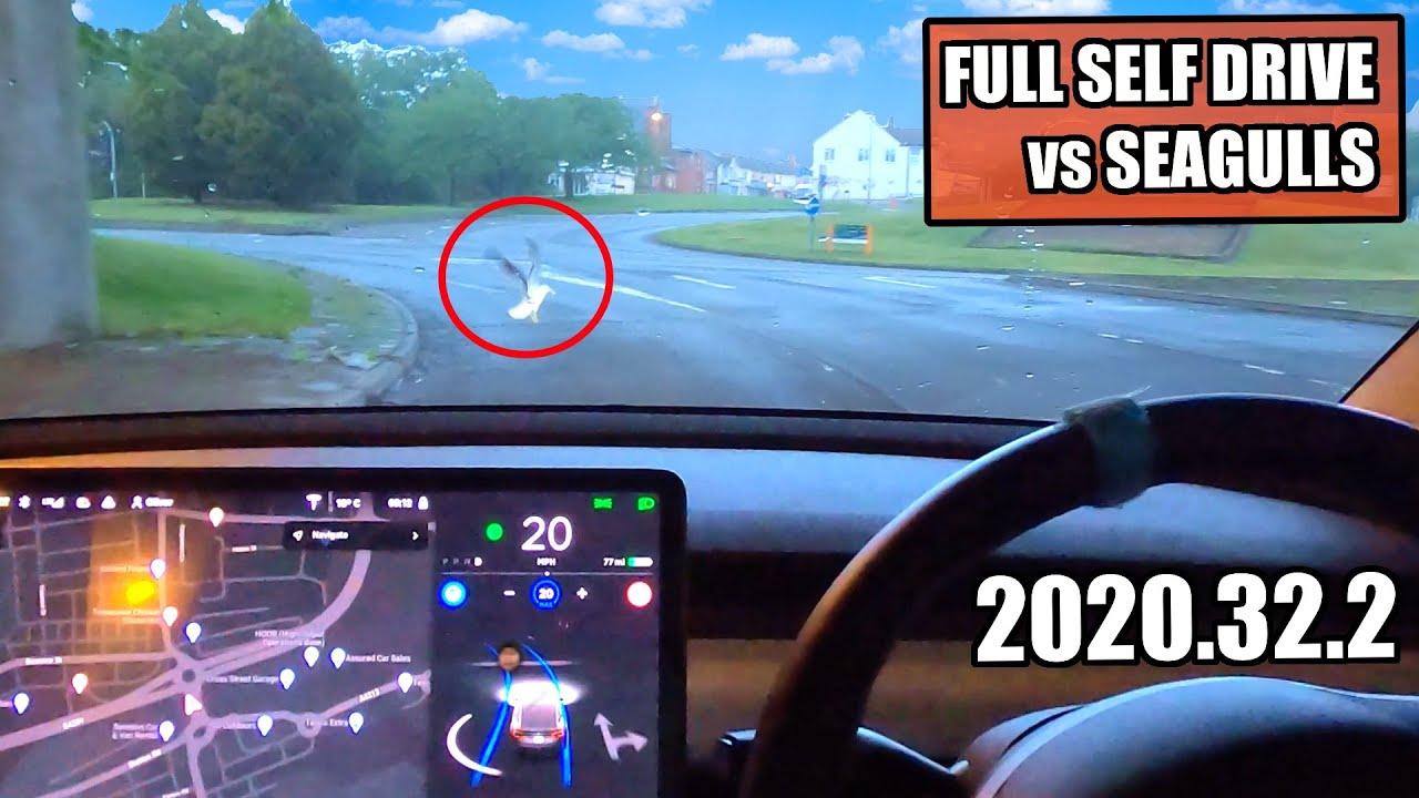 Autopilot DOESN'T stop for Seagulls! - Tesla FSD in Swindon Town 2020.32.2