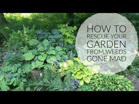 How To Reclaim A Weedy Garden   The Impatient Gardener