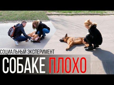 Собаке плохо на улице | Социальный эксперимент