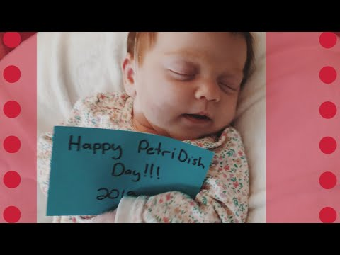 IVF Family's Special Holiday  Petri Dish Day