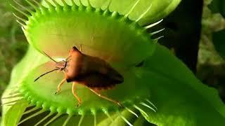 5 растений, которые едят животных.