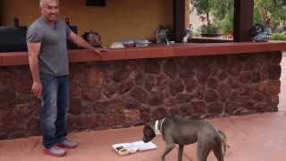 The Dog Whisperer Explains: Summer Fun - Dogs and Parties