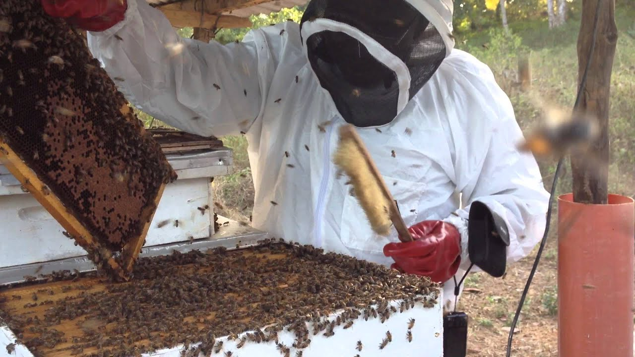 Bee Hive Placement Learning the Art of Bee Keeping