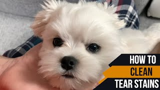 HOW TO CLEAN TEAR STAINS FOR A PUPPY