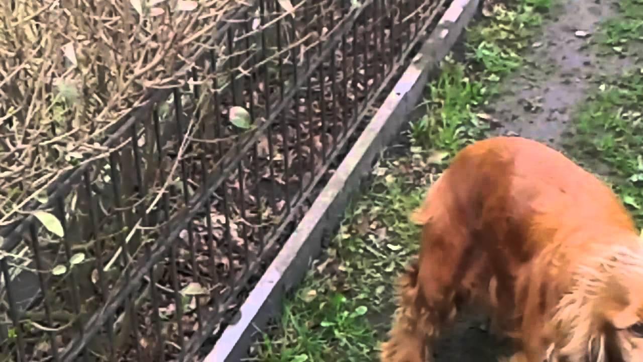 Pies Kręci Dupą Wtf