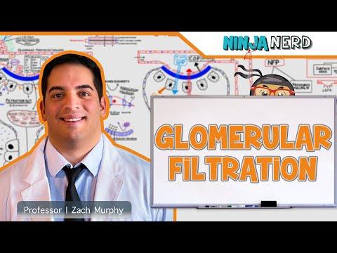 Renal | Glomerular Filtration