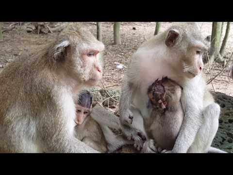 Very pity little baby monkey live in misery, Real life daily
