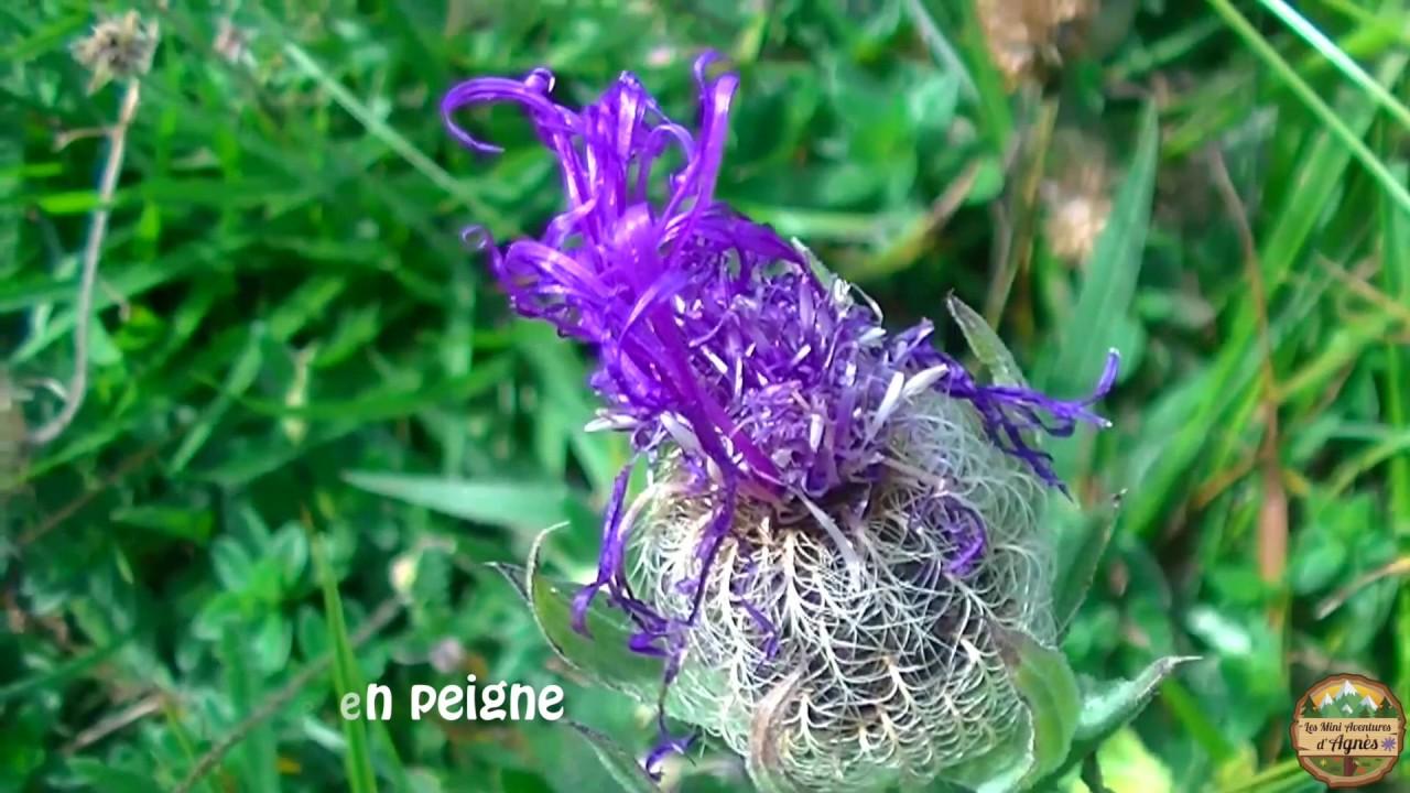 De Belles Fleurs De Montagne Avec Leur Nom Youtube