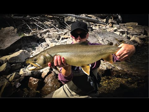 How To Catch HUGE Bull Trout - Streamer Fishing For Aggressive Fish (Tips & Tricks)