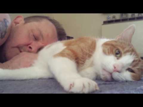 Sad Cat Video ' ill See You Again'