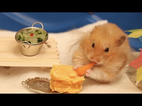 Thumbnail: Making Tiny Things For Our Hamster 2