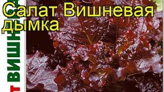 Салат листовой Вишневая дымка. Краткий обзор, описание характеристик Vishnevaya dymka