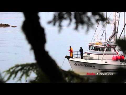 Seal bombs thrown into Sitka hatchery net fine against skipper