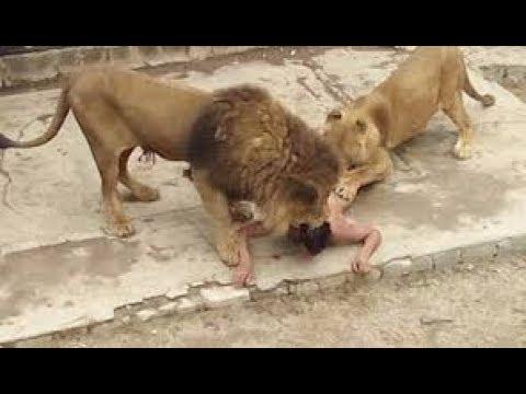 Le Défi Entre L'homme Et L'animal En Afrique