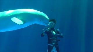 シロイルカファンタイムの練習、リーヤと海獣リーダーさん・上越市水族館うみがたり(2019.6.13)