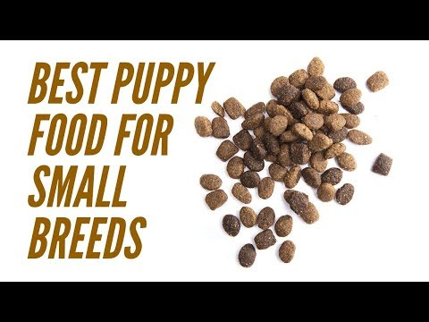 Best Puppy Food For Small Breeds – Picking The Right Dog Food Brand For Your New Dog