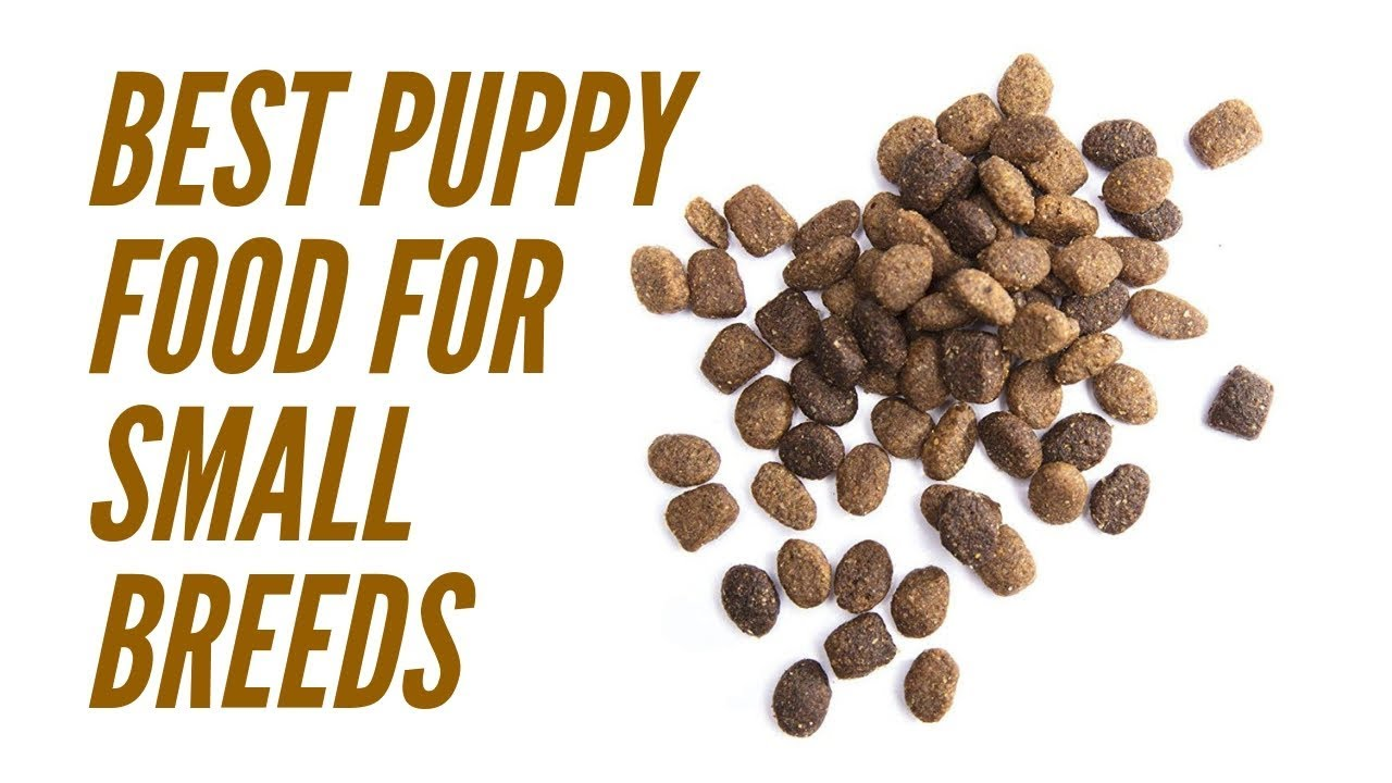 Best Puppy Food For Small Breeds Picking The Right Dog Food Brand