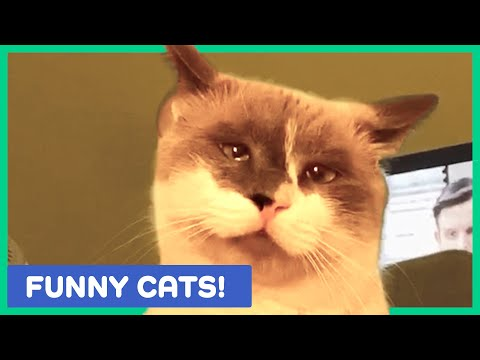 CUTE AND FUNNY CAT VIDEOS TO START YOUR WEEK!