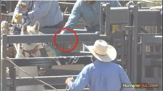 San Diego Humane Society Ignores Shocked Rodeo Horses