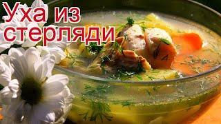 Рецепты из стерляди - как приготовить стерляди пошаговый рецепт - Уха из стерляди за 90-100 минут