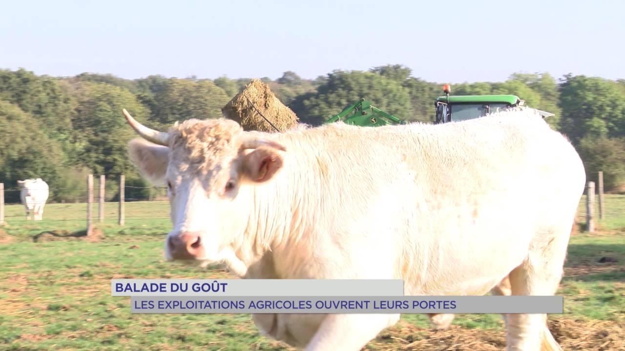 Balade du goût : les exploitations agricoles ouvrent leurs portes